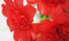 Купить цветы оптом ростове дону демотиваторы подарок на 8 марта